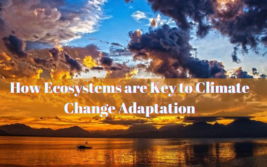How Ecosystems are Key to Climate Change Adaptation