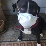 Shade shows us how to wear PPE