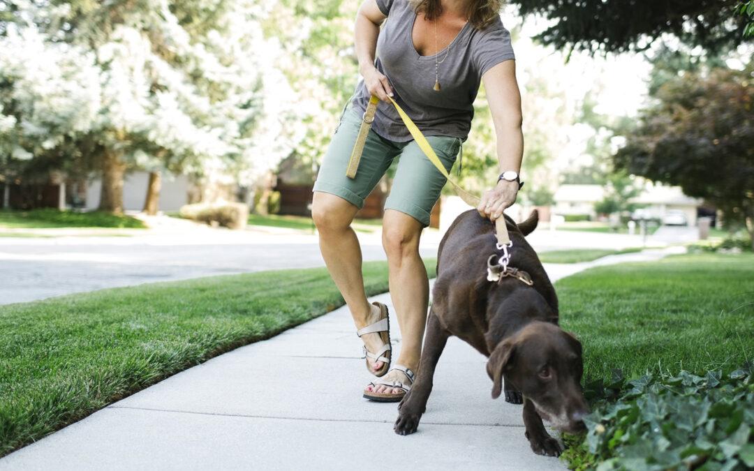 dog walking can cause pain