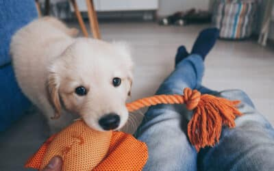 How to Puppy-Proof Your Pet-Friendly Apartment