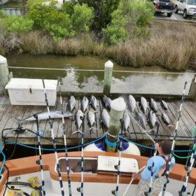 Yellowfin tuna charter Pirates Cove, North Carolina