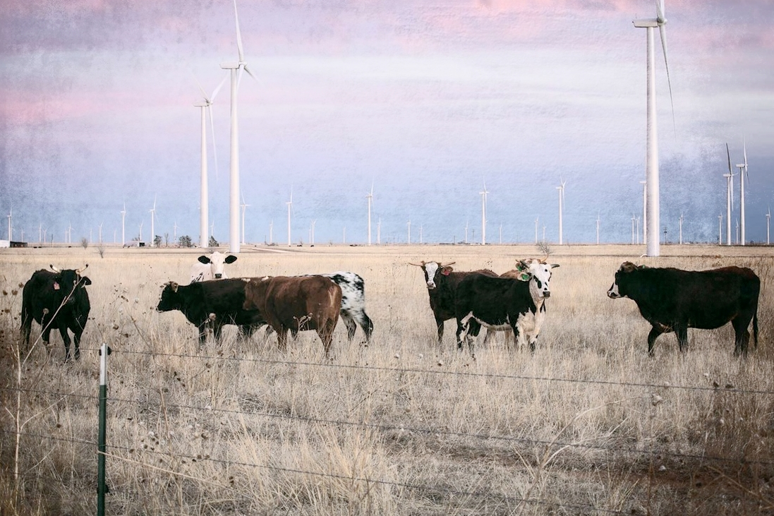 Image result for texas wind farms
