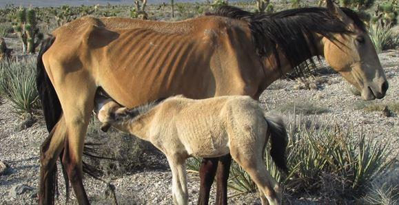 091416_1a_Horse_Gather_dah