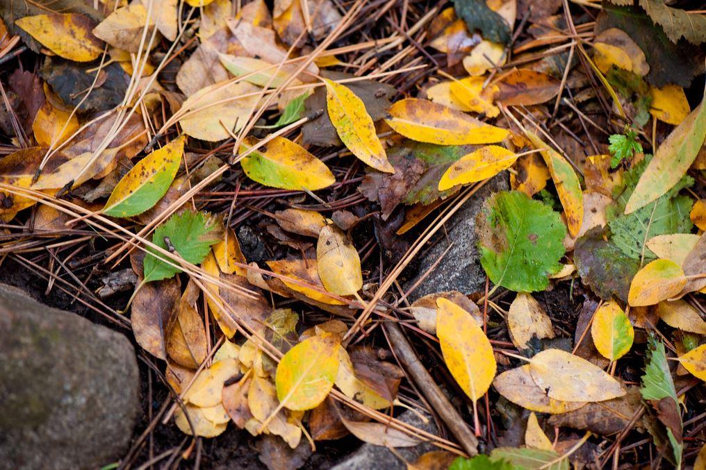 autumnbearsears6