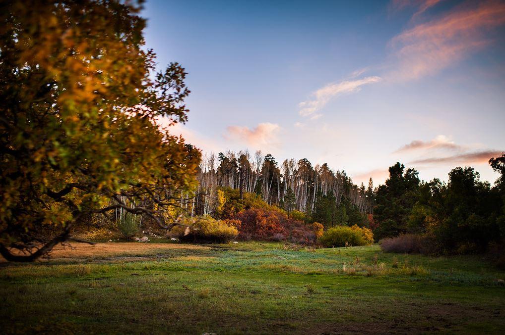 autumnbearsears9