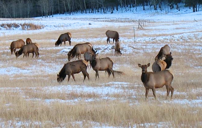 Vlad Amani, visiting Rocky Mountain National Park from