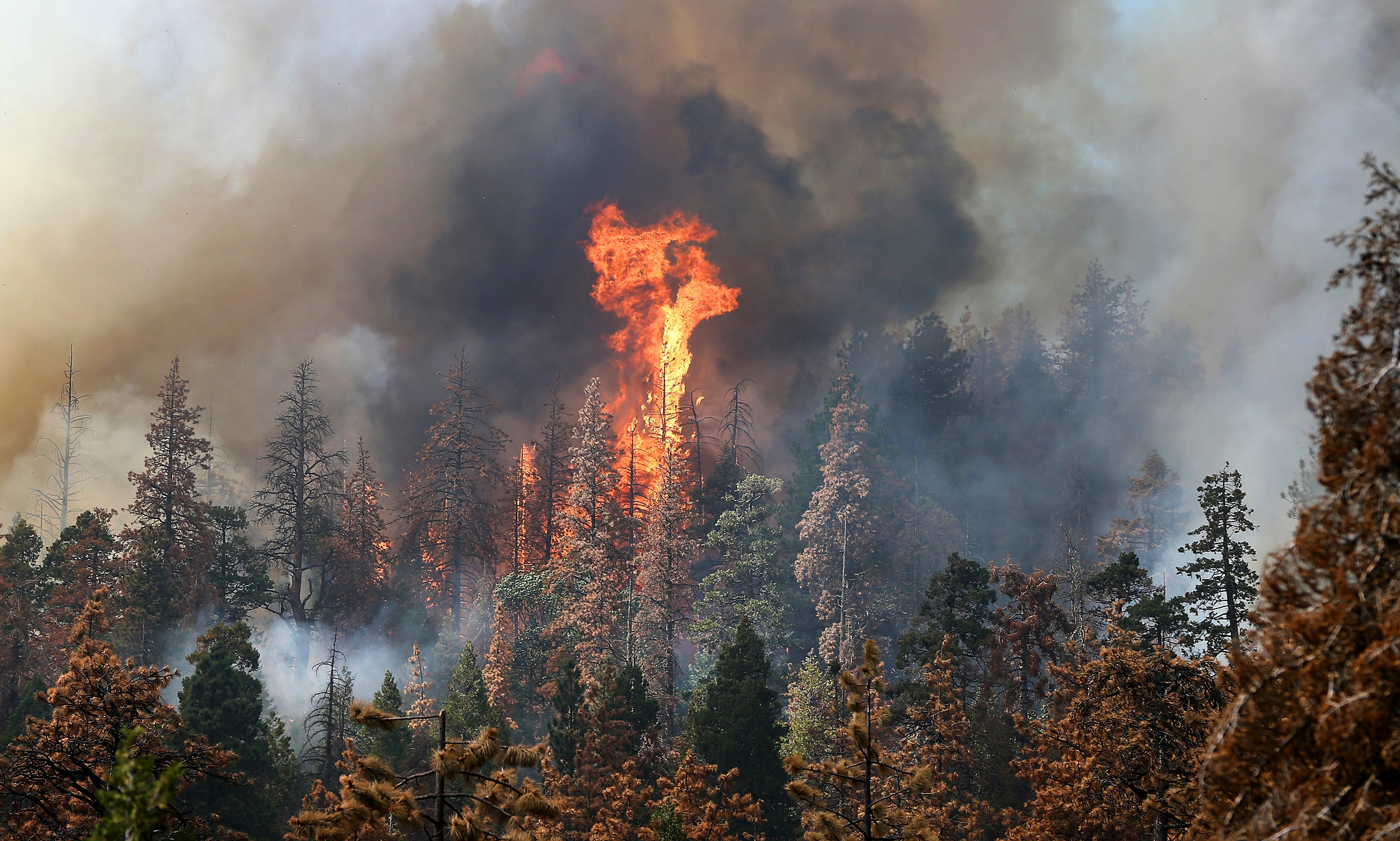 Image result for sequoia fire