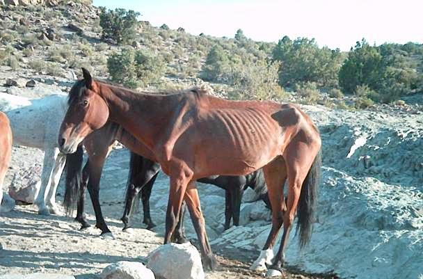 horse11
