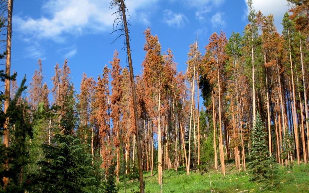 Logging tour