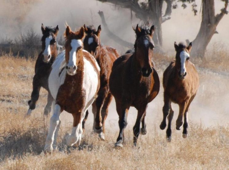 wild-horses-745x551