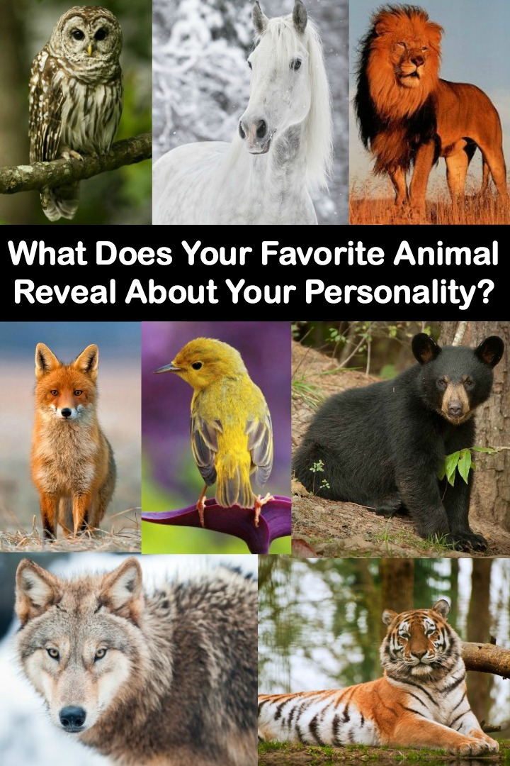 What Does Your Favorite Animal Reveal About Your Personality? ~