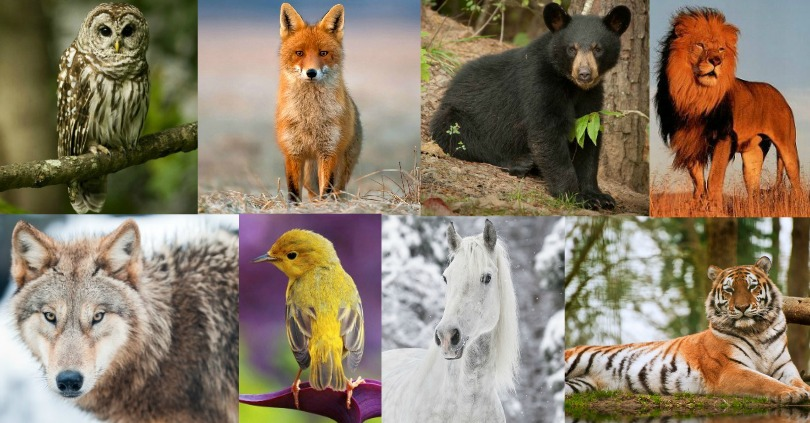 What Does Your Favorite Animal Reveal About Your Personality?