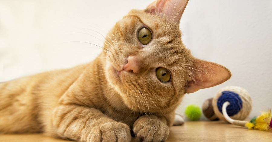 Research Reveals Cat People are Smarter Than Dog People