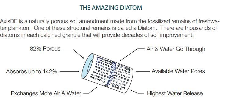 AxisDE Amazing Diatom