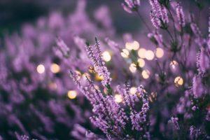 sleep, wellness, lavender, instasleep