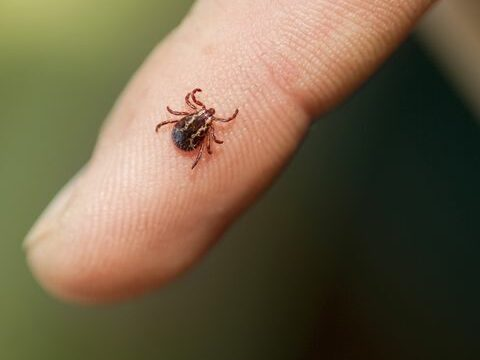 Tick Proof your Yard