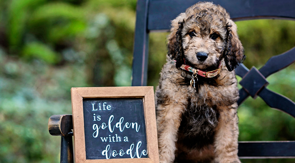 Are Goldendoodles Good with Kids?