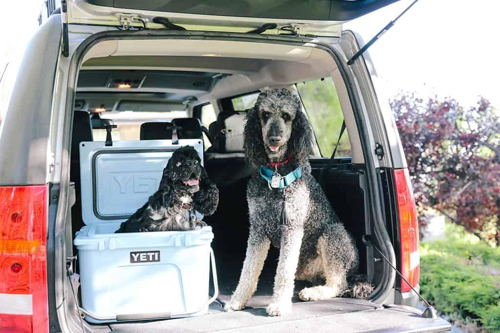 Medical Service Dog Tasks