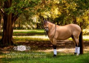 Equine Fine Art front