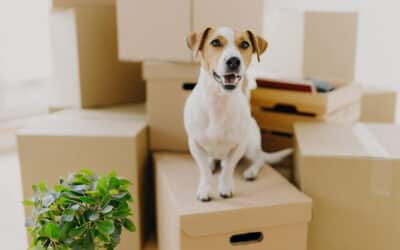 Moving during COVID? Follow These Tips