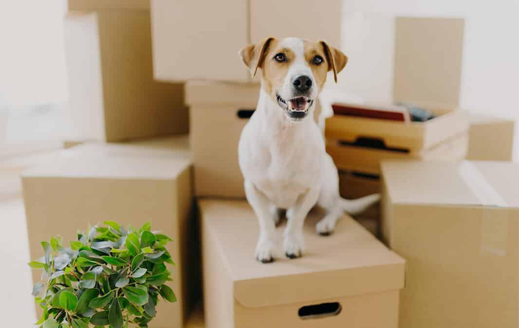 dog sitting on moving box