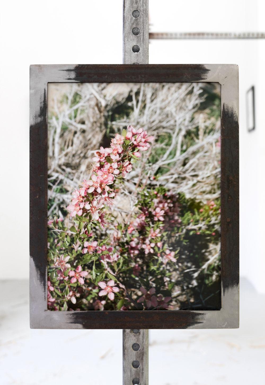 Suzanna Zak Now Let Us Gather Some Desert Peaches, 2016 C-print, sticker, artist's frame
