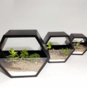 Beehive Succulent Terrariums