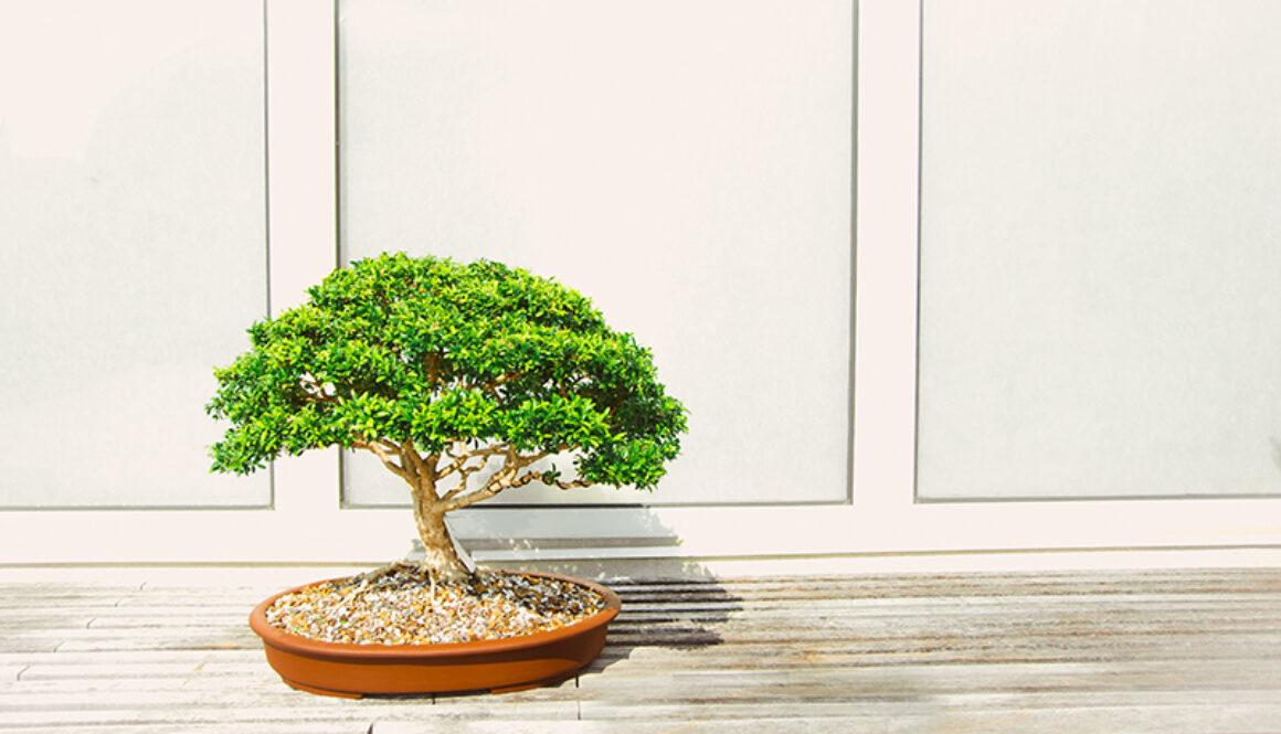 bonsai-garden-plant-1382195