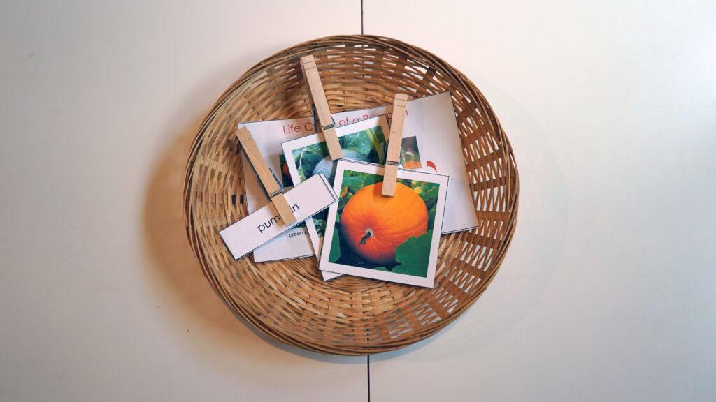 Pumpkin Montessori Activity 3 part cards