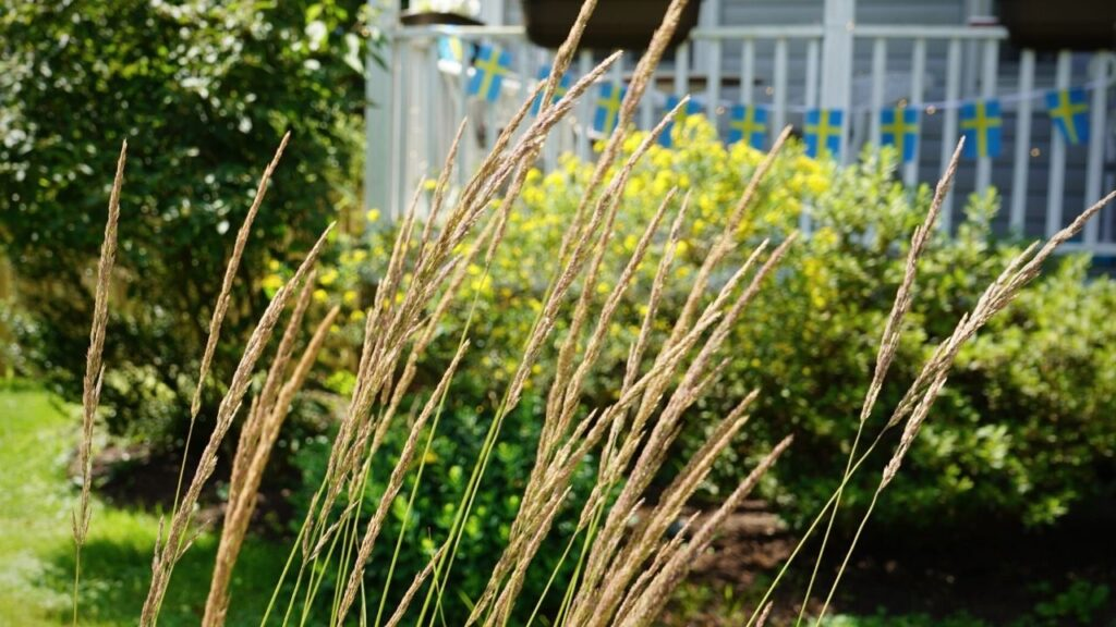 Victorian Farmhouse Grass