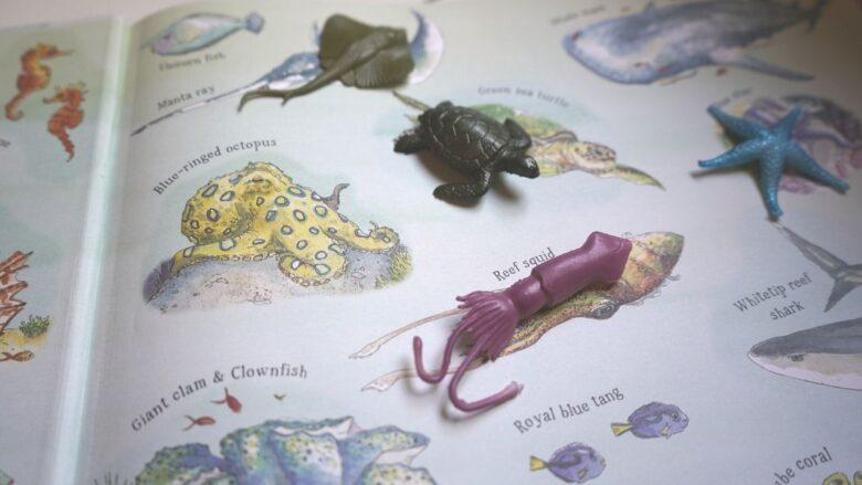 The Coral Kingdom Montessori Oceans