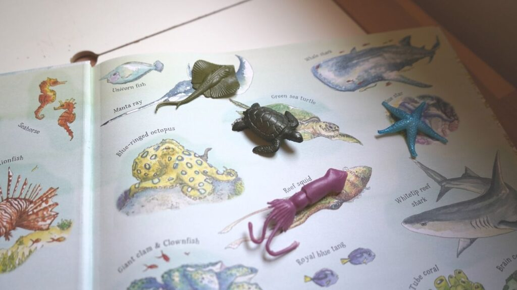 Ocean Montessori Learning Unit