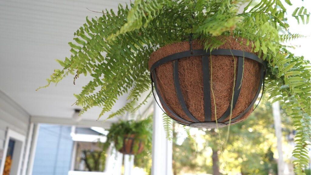 Fall Porch Decor Hanging Ferns