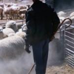 Be a Shepherd, For God's Sake!