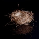 The Nest and The Bow – A Fable