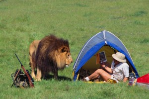 Lion Surprise
