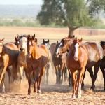 The Idea of Horses