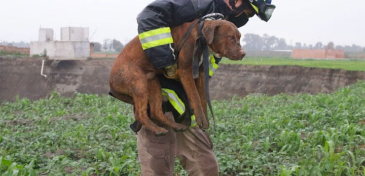 UNDER PUBLIC PRESSURE, AUTHORITIES IN PUEBLA RESCUE DOGS FROM GIANT SINKHOLE