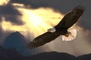 Soar Like The Eagle