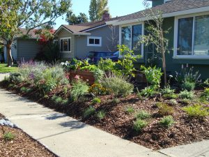 completed native garden