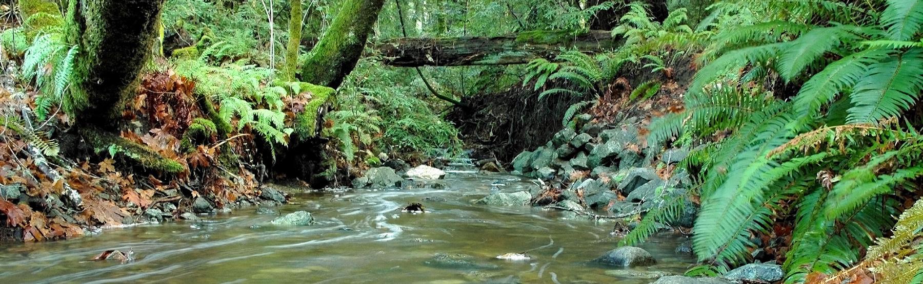 Marin's Clean Water Program