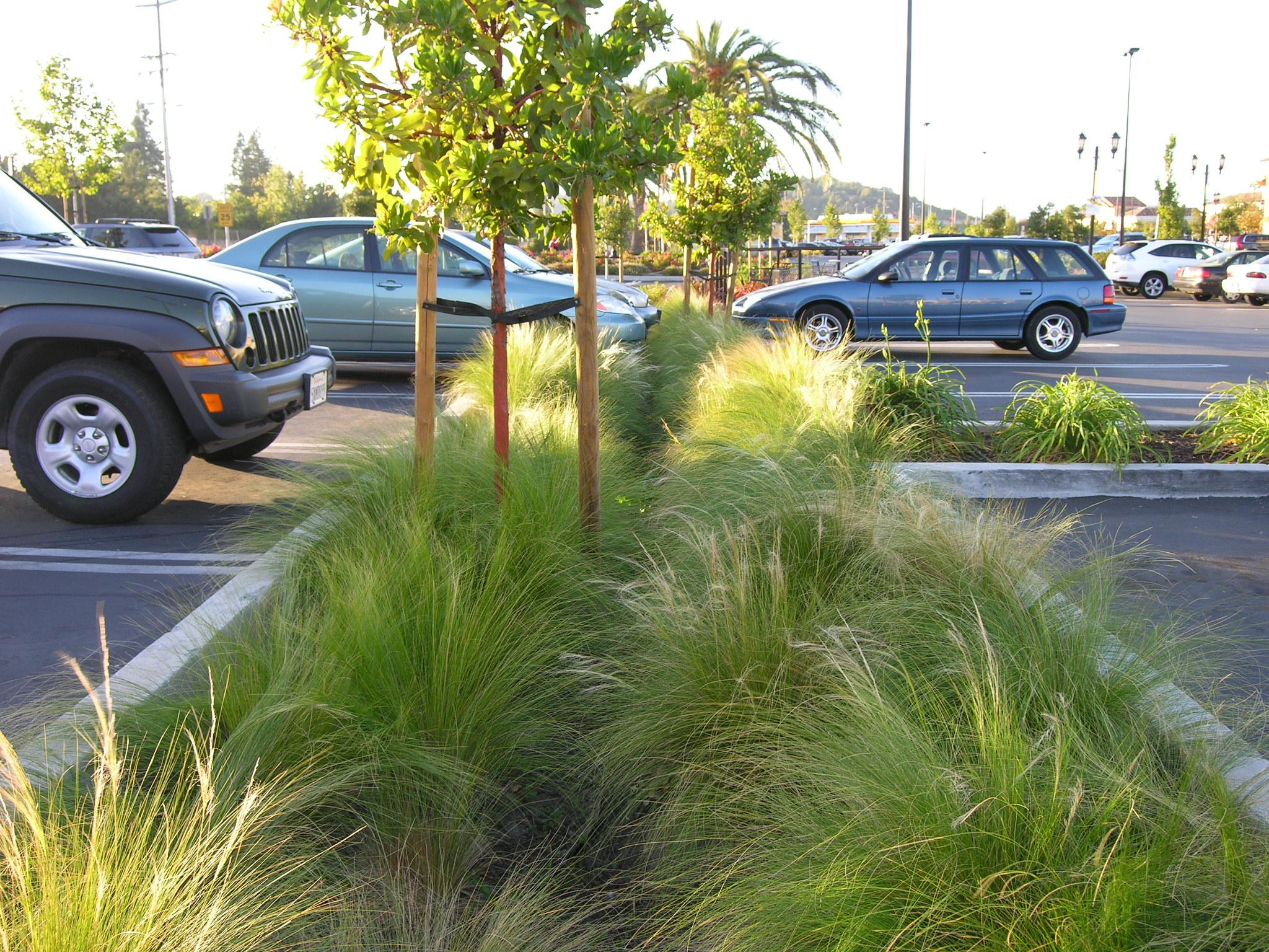 parking strip bioretention