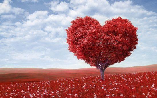 Enamoramiento, amor y desamor