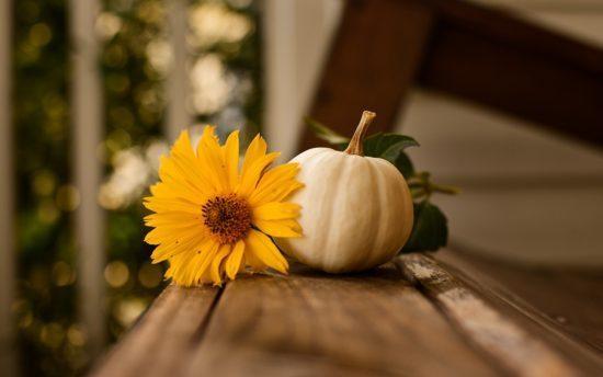 Sobre el Día de Acción de Gracias