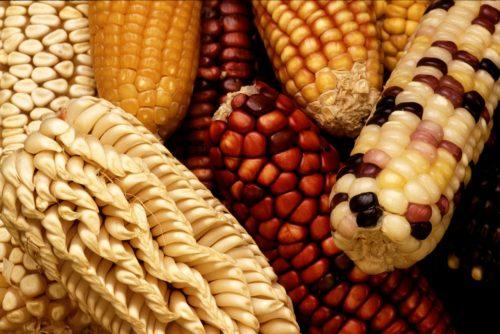 Sin maíz, no hay país