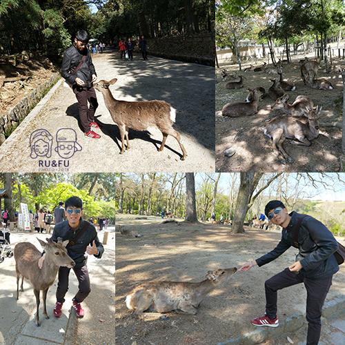 日本關西圖片-鹿