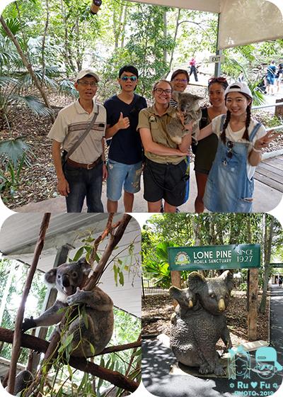 澳洲圖片-龍柏動物園(無尾熊)