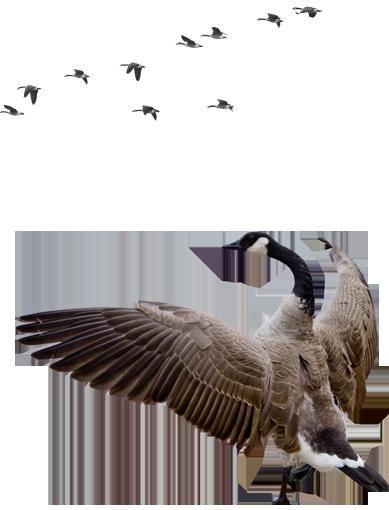 Wild Goose Christian Community