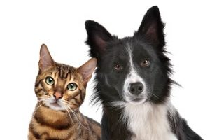 Keeping a House with Pets Clean
