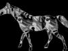 mamondark-grey-camo-horse-2012-03-12-at-2-26